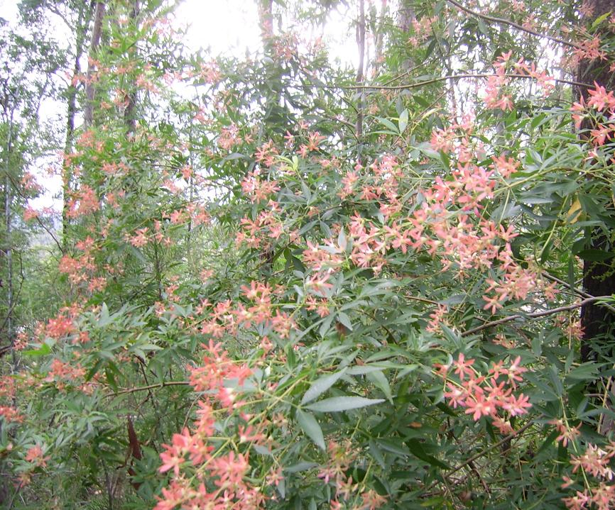 pinkwildflowerssandsswampforest.jpg